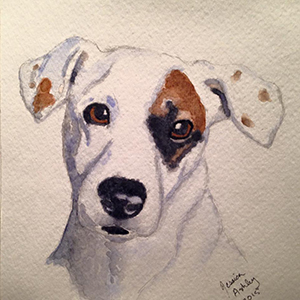 Jack Russell Terrier by Jessica Ashley