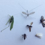 insectsWeb