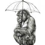 monkey-in-the-rain